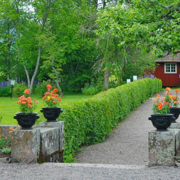 trädgård med urnor, grusgång, häckar