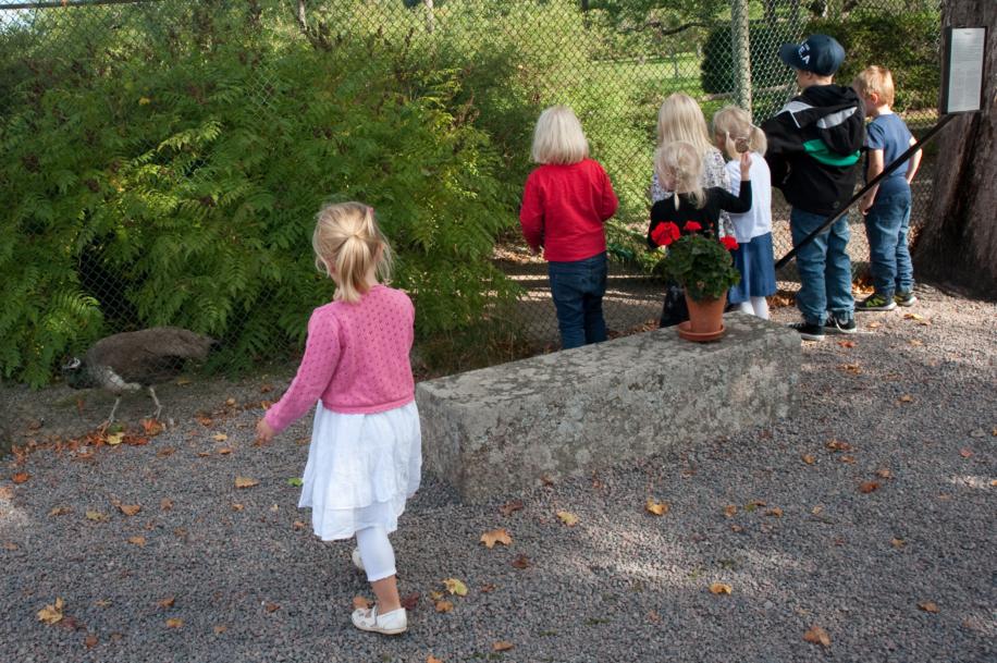 Barn som tittar på påfåglarna